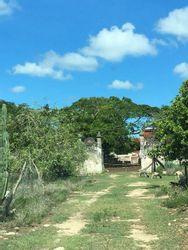 NEX-21951 - Terreno en Venta en Yobaín, CP 97425, Yucatán, con 8 recamaras, con 8 baños, con 3000 m2 de construcción.