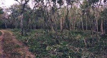 NEX-8020 - Terreno en Venta en Santa Inés Buenavista, CP 29130, Chiapas.