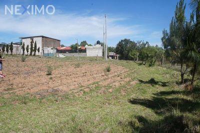 Terreno en Venta en Rancheria Calapa, Chignahuapan, Puebla | NEX-649 | Neximo | Foto 5 de 5