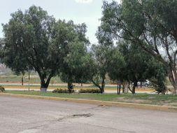 NEX-34399 - Local en Renta en San Pedro Nopancalco, CP 42084, Hidalgo, con 1 medio baño, con 55 m2 de construcción.