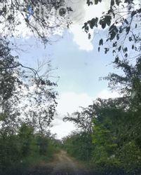NEX-50346 - Terreno en Venta en Temozón, CP 97740, Yucatán.