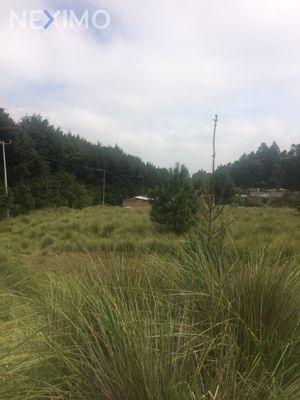 Terreno en Venta en Santo Tomas Ajusco, Tlalpan, Ciudad de México | NEX-2082 | Neximo | Foto 5 de 5